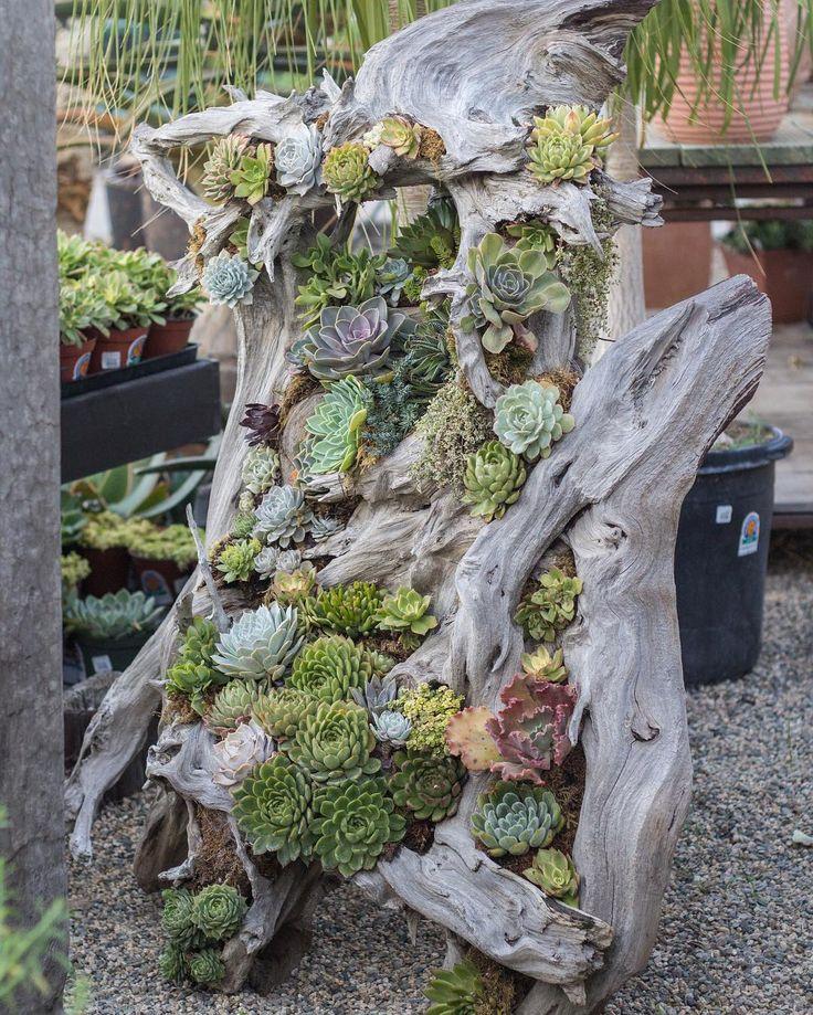 Wonderful way to display succulents!