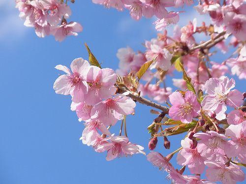 桜も大分散って葉桜になりつつありますね寂しい限りではありますがこれも夏に向かうため過ぎ行く季節を感じながら楽しくライドしましょう  さて今週気になった自転車関連情報は次の通りです  ヘルメットにブレーキランプウィンカーが搭載されたLumos Helmet  ヘルメットにブレーキランプやウィンカーになるライトが付いているという面白い商品です頭部であれば目立ちますし余計な装置を自転車につける必要もないためストレスも少なくてすみます自転車に乗っているとハンドサインを使うという手段もありますが万人がハンドサインの内容を知っているとも限りませんのでやはりあると便利ですね  バルブにくっつけるだけでパワー計測してくれるAROFLY  なんとバルブに装着するタイプのパワーメーターが存在するようですタイヤ圧力の変化から計測するとのことなんかの拍子に先っちょが吹っ飛んでいってしまいそうな印象がありますがその実力や如何に  メーカーサイトはこちら  WORLDCYCLEさんで取り扱っているみたいですAmazonや楽天では見つからず  折りたたむとタイヤサイズになる折り畳み自転車DAHON CURL…