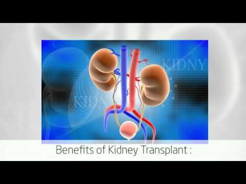 Renal Failure Treatment: Kidney Transplant Cost in India