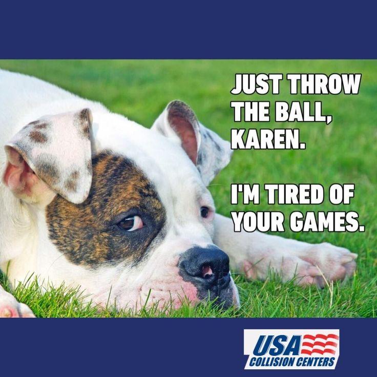 Pin by K K on Karen memes Dog memes, Dogs, Karen memes