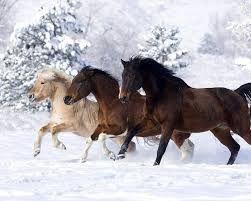 koně - Hledat Googlem