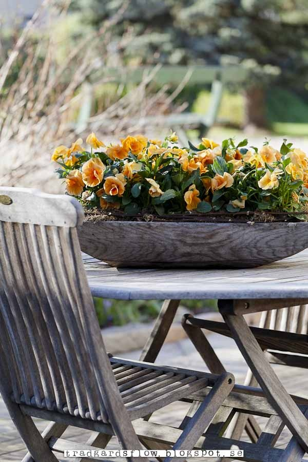 Pansies in a wooden bowl charming bienvenue dans mon for Table jardin beauty