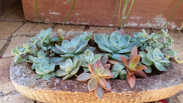 Succulents in hypertufa pot.