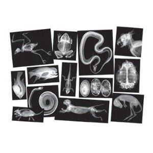 animal x-rays for vet and science play
