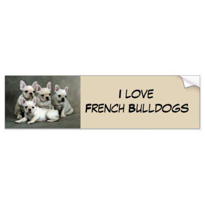 #Cute French Bulldog Puppies Bumper Sticker - #Petgifts #Pet #Gifts #giftideas #giftidea #petlovers