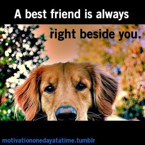 14 Best Images About Girls Best Friend On Pinterest