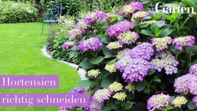 Die 25 besten ideen zu hortensien garten auf pinterest for Hortensien garten anlegen