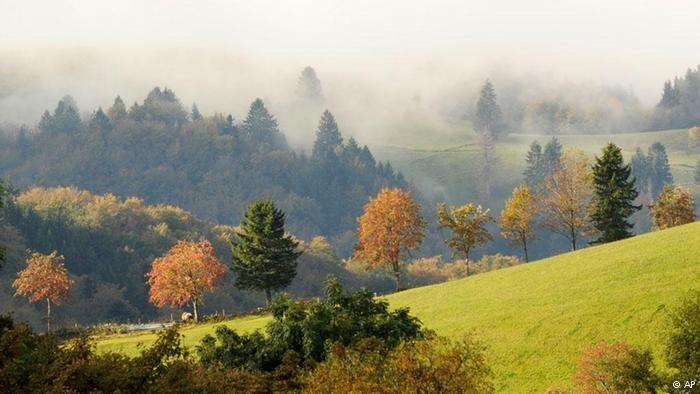 Floresta Negra, no sudoeste da Alemanha. Abrange uma extensão de 365.000 hectares ao longo de uma cadeia de montanhas ao norte dos Alpes. O ponto mais alto é a montanha de Feldberg, com 1.493 metros. Fazendo fronteira com a França e a Suíça, é a maior área de floresta fechada na Alemanha. Pinheiros e abetos correspondem a 80% da vegetação. Os animais mais comuns são cervos, javalis, raposas, texugos e lebres. Há alguns séculos, até mesmo ursos, linces e lobos viviam nessa região.