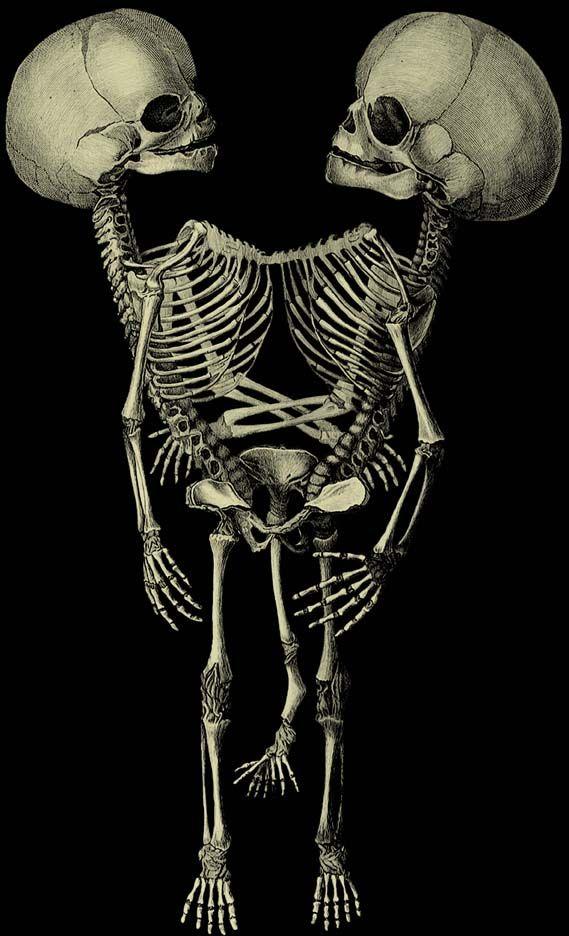 картинки с скелетиком том