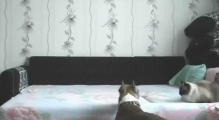 Verborgen camera legt vast wat hond doet die niet op bed mag