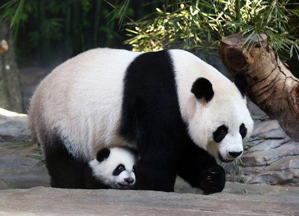 Расстрелянный портрет Кадырова и гигантские панды: фото дня - Korrespondent.net