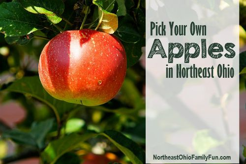 It's that time again.  Details on 20+ locations where you can Pick Your Own Apples in Northeast Ohio.  Gotta Love Fall!