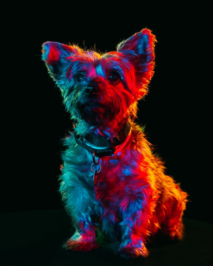Colorful Portraits of Adoptable Dogs Photographed by Paul Octavious | Colossal