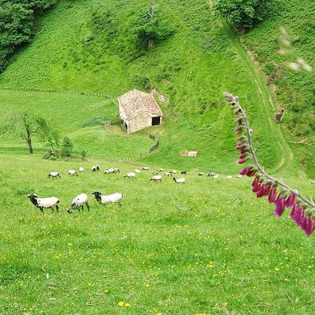 #Urepel #photooftheday #green #montagnebasque #PaysBasque #basquecountry #euskalherria #mendia #bortua #rando #instarando #randonnée #montagne #basque #paysage #greenmountains photo de @totegoyeneche