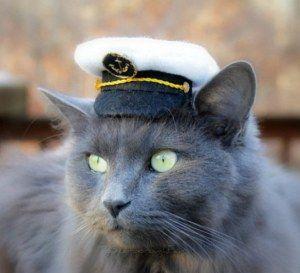 Капитан зло кот