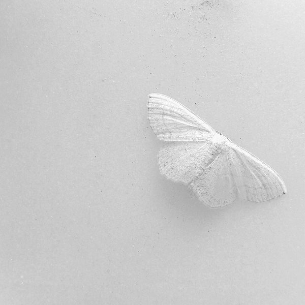 White Butterfly FROM: the-whiteness-of-milk:  a silent on the stone by *aopan