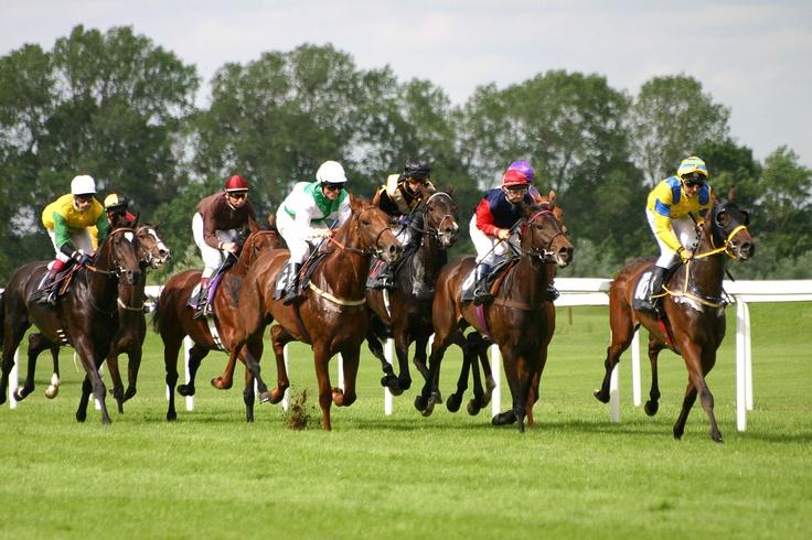 Horse racing betting near me nigeria sport betting website