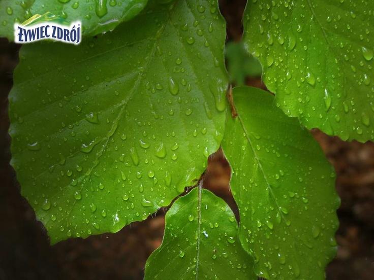 Po deszczu w Beskidach
