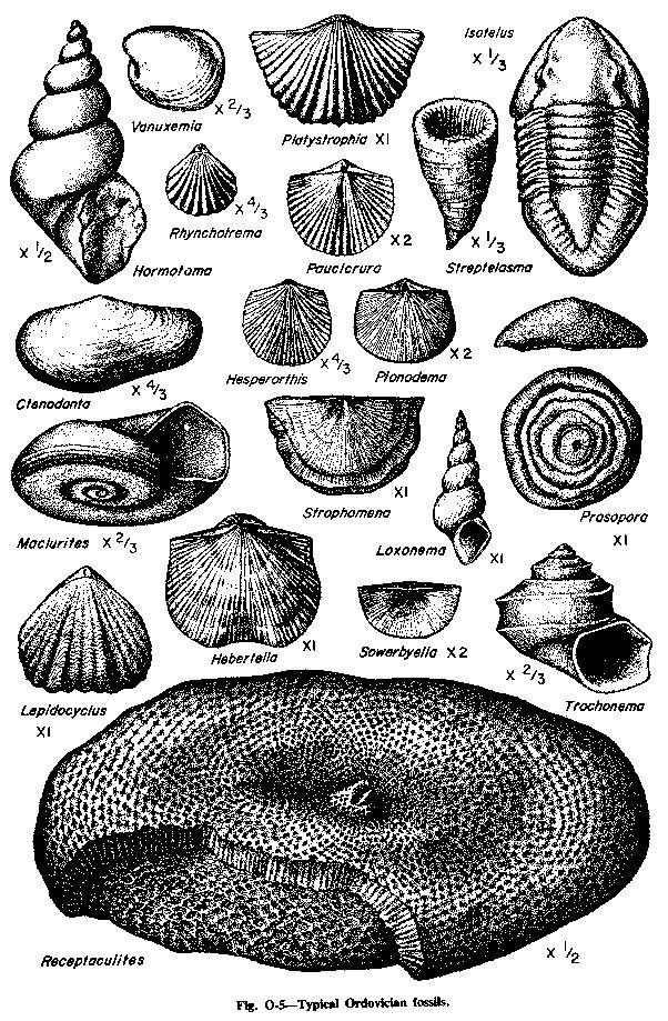 Ordovician Fossils