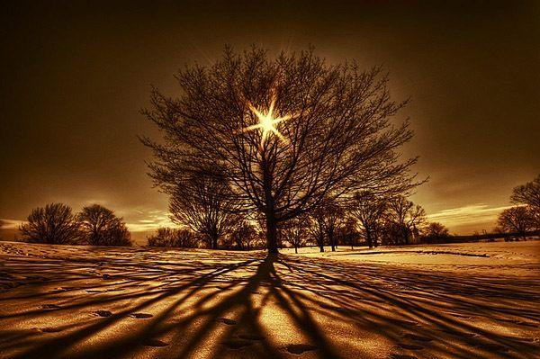 Soothing!: Natural Photography, Trav'Lin Lights, Natural Beautiful, Trees Photography, Mornings Stars, Natural Pictures, Lights Photography, Trees Of Life, Sun