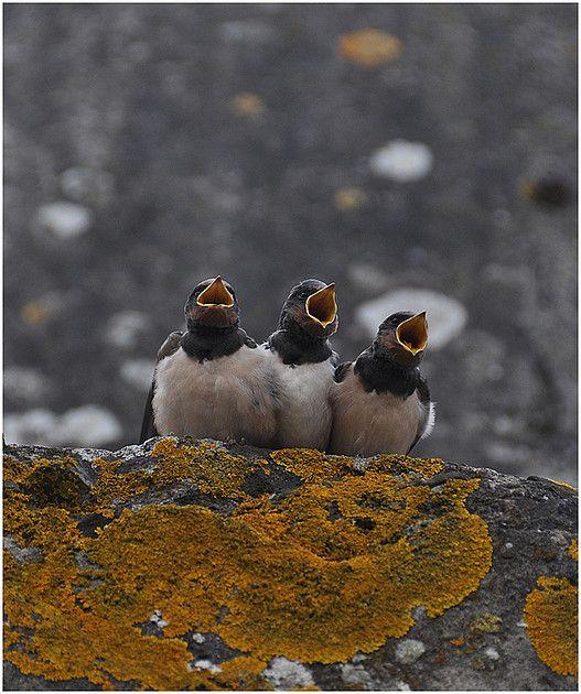 Jonge Zwaluwen op Pampus. Fotograaf: dreprijs58