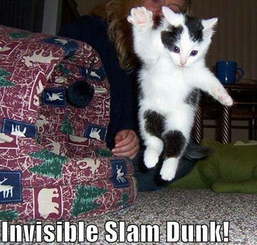 ネコがまるでパントマイムのように見えないものと戯れる画像いろいろ - GIGAZINE