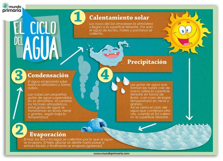 Infografía sobre Los ciclos del agua. Mundo Primaria.