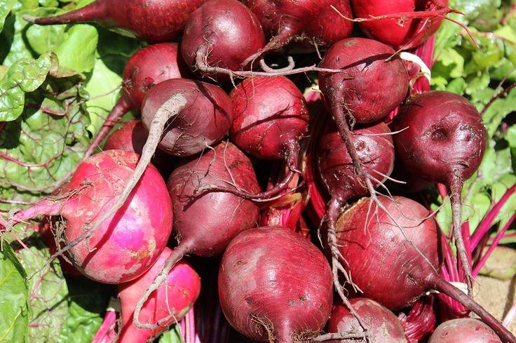 Poljoprivreda,pemakultura,recepti za biljne pripravke,melem,kreme,čajeve...