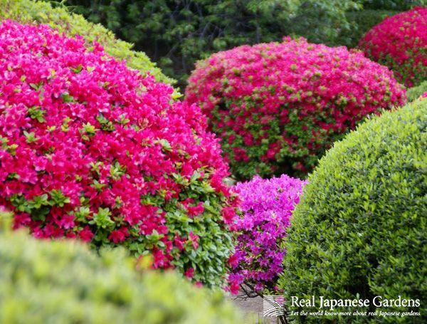 Azaleas in Shinjuku Gyoen | Real Japanese Gardens