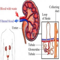 Correct Rhabdomyolysis Treatments