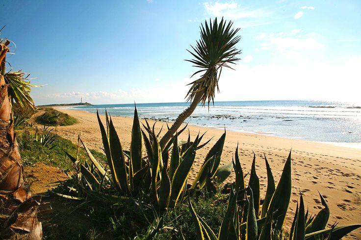 einer der schönsten Strände der Costa de la Luz, dem südlichsten Zipfel Spaniens #atlantik #andalusien #strand #vamosreisen