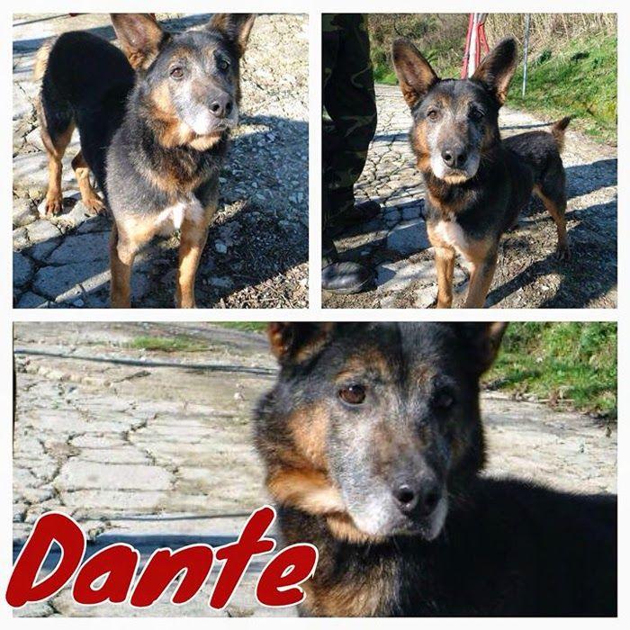 DANTE non ci crede più: è stanco di aspettare http://adottauncaneanziano.blogspot.it/2014/03/dante-non-ci-crede-piu-e-stanco-di.html