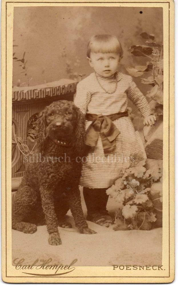 Antique CDV PHOTO large black POODLE DOG next to sweet little girl Portrait Card
