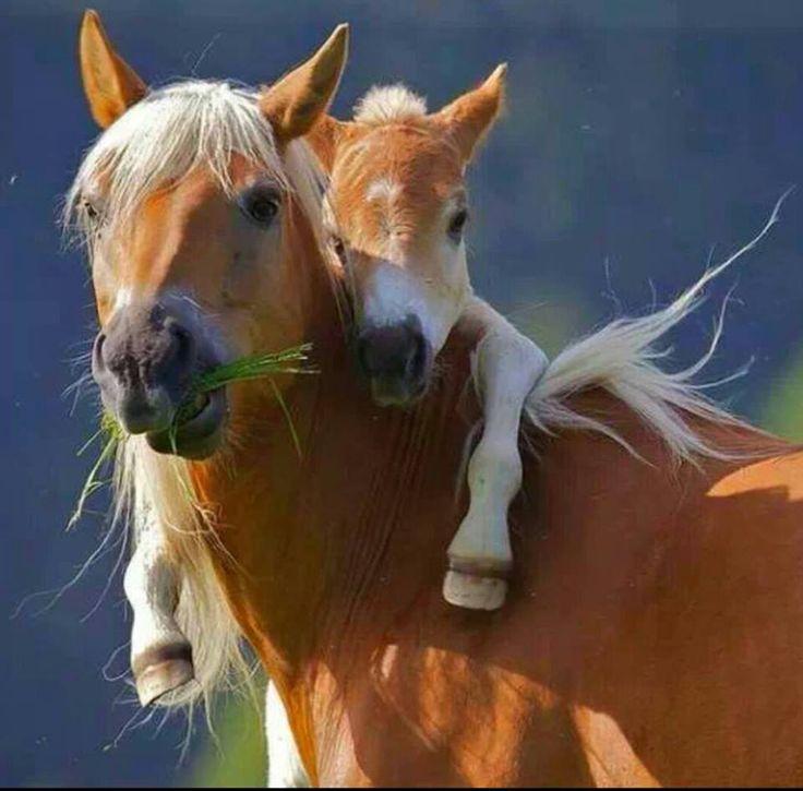 Égua com seu potro