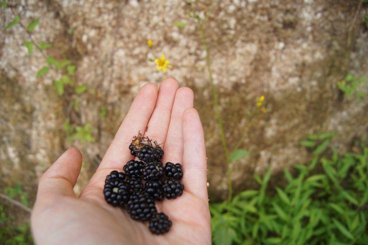 #dewberry #nature #purple