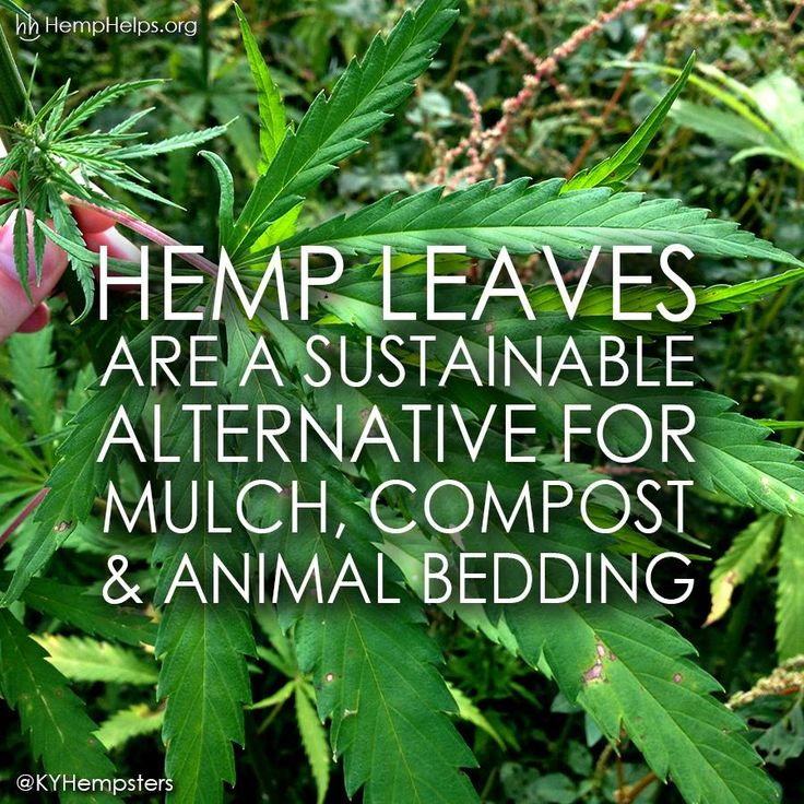 Lyric ganja farmer lyrics : 622 best Cannabis Sativa | Hemp images on Pinterest | Hemp ...