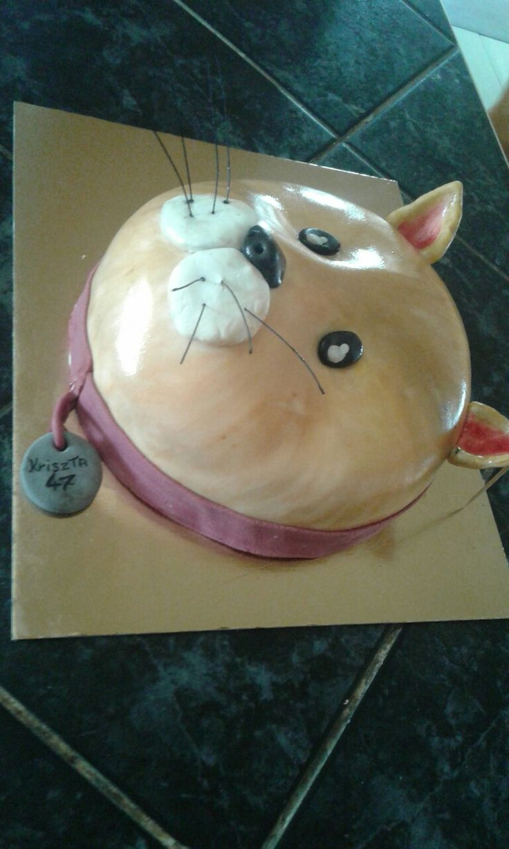 Cica torta