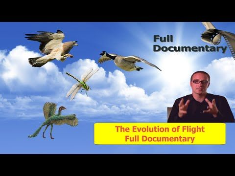 Full Documentary - The Evolution of Flight - Full Documentaries