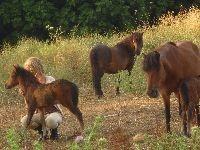 Pony help in Skyros, Greece
