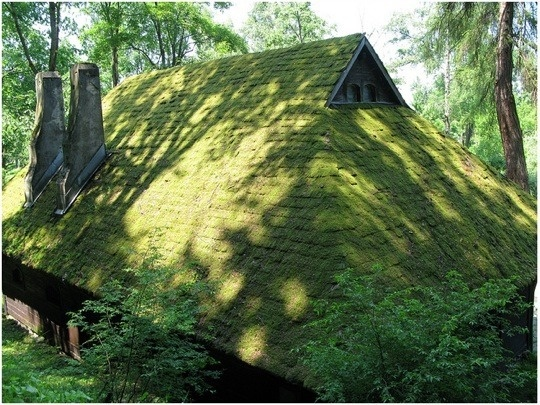 how to kill moss on roof naturally