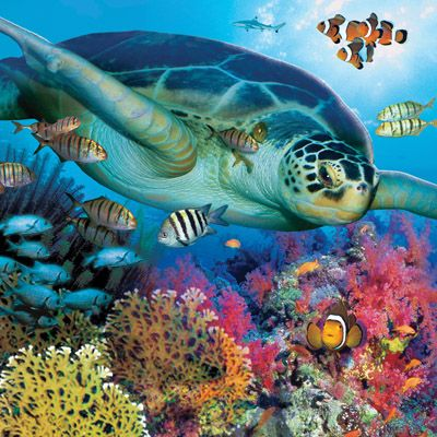 SEA LIFE Brighton    Plan #yourjourney online at http://ojp.nationalrail.co.uk/service/planjourney/search