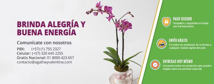 Die besten 25 viveros plantas ideen auf pinterest for Viveros plantas ornamentales colombia