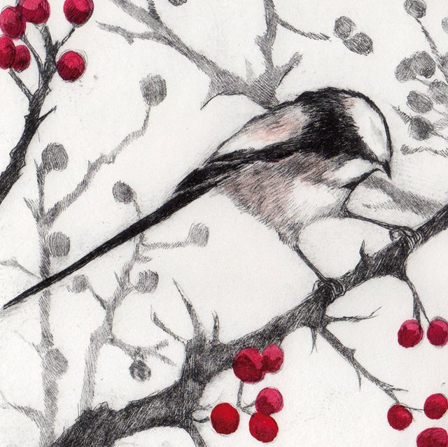297 best greeting cards images on pinterest art cards greeting blank art cards by green pebble m4hsunfo