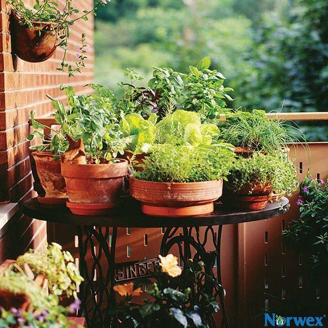 77 best images about eco gardening on pinterest gardens for Corner vegetable garden ideas