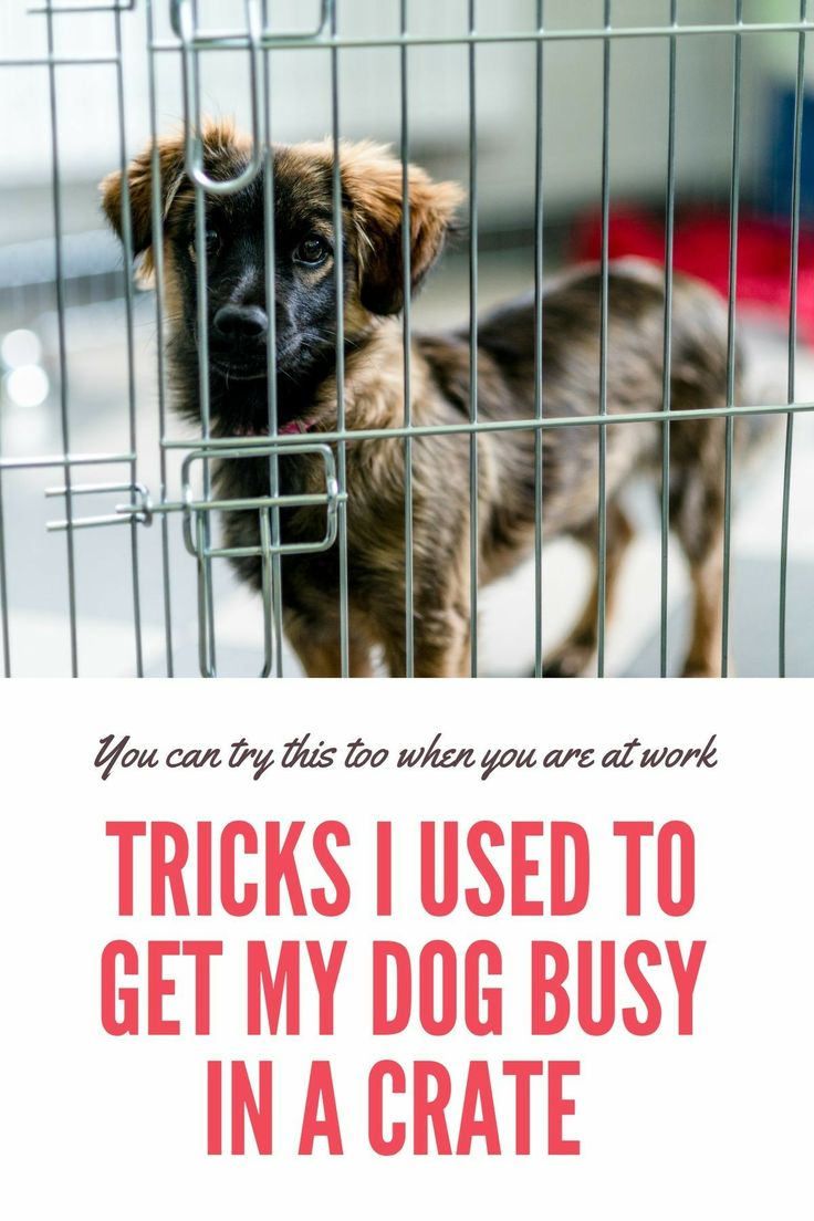 How To Get Your Dog To Stop Whinning In His Crate Training Your Dog Dog Training Dog Training Tips