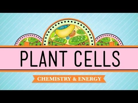 Plant Cells: Crash Course Biology #6.... and many many more crash courses in many many different subjects!