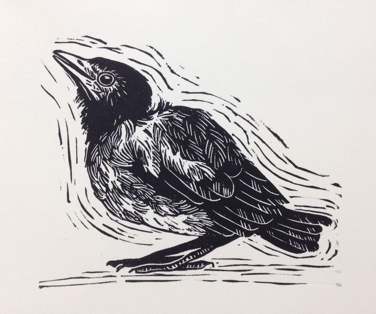 Baby Magpie - Just out of the nest Lino 2017