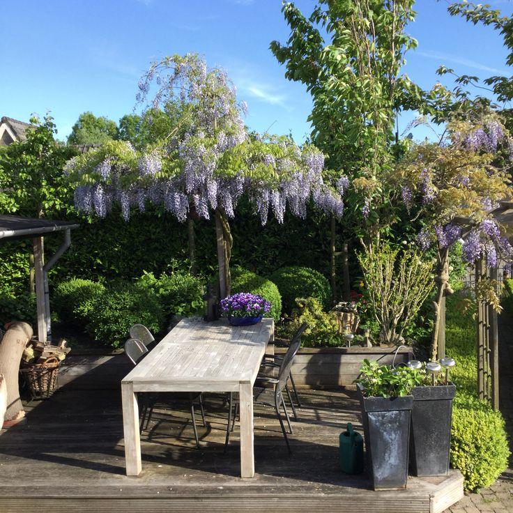 Blauwe regen als parasol beplanting tuin pinterest - Bassin tuin ontwerp ...
