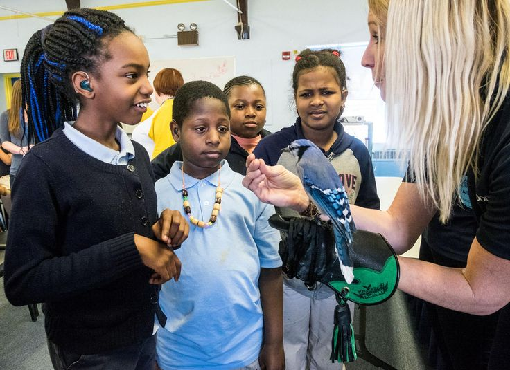 How Do You Say 'Great Backyard Bird Count' in American Sign Language?  | Students at the Pennsylvania School for the Deaf meet Conrad the Blue Jay, a visitor from Mill Grove Audubon Center. Photo: Ed Hille/The Philadelphia Inquirer