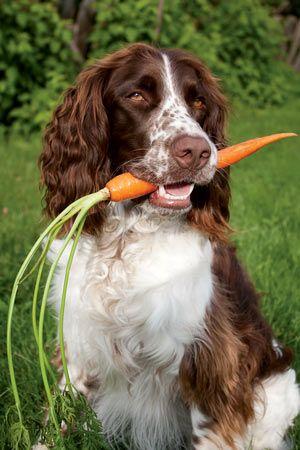 Feeding pets healthy vegetables
